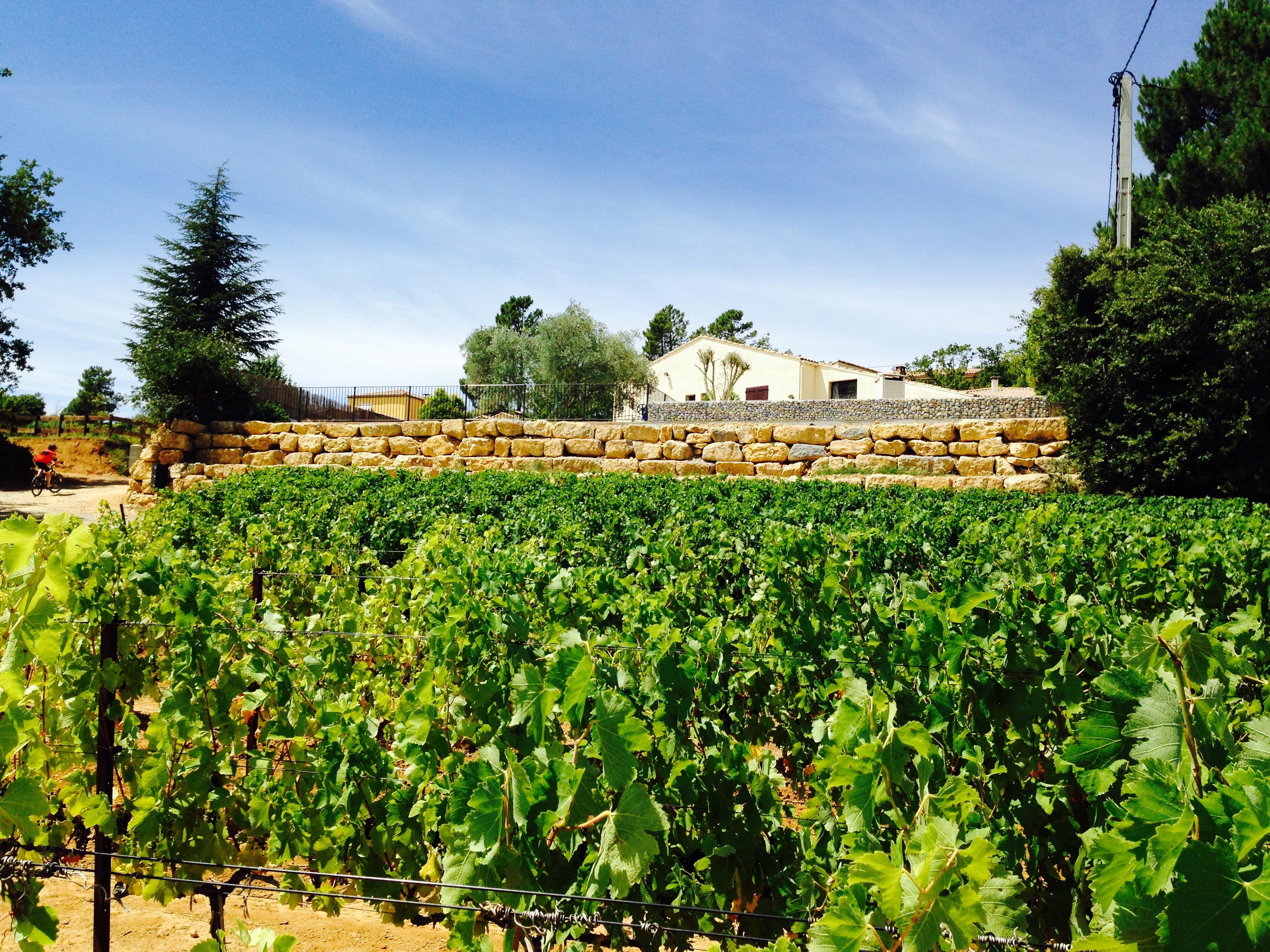 La villa vue des vignes