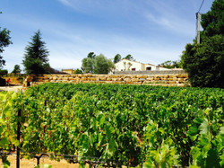The villa seen from the vineyards