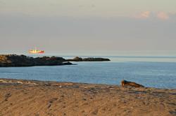 Matveev Island