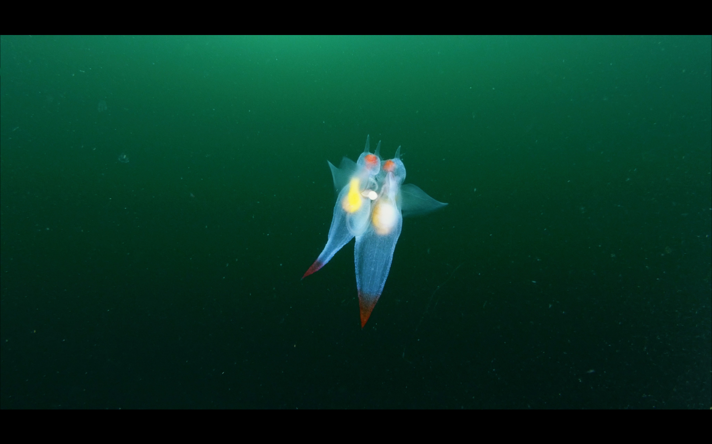 Kartesh underwater 7 — копия