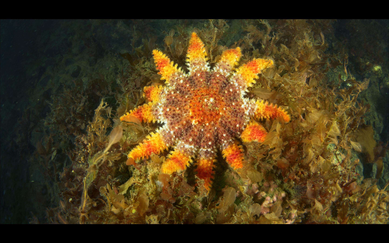 Kartesh underwater 13