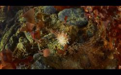 Kartesh underwater 2 — копия