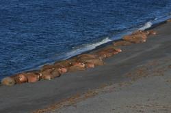 Остров Вайгач