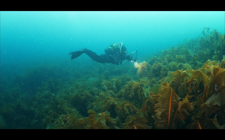 Kartesh underwater 6 — копия