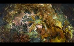 Kartesh underwater 12