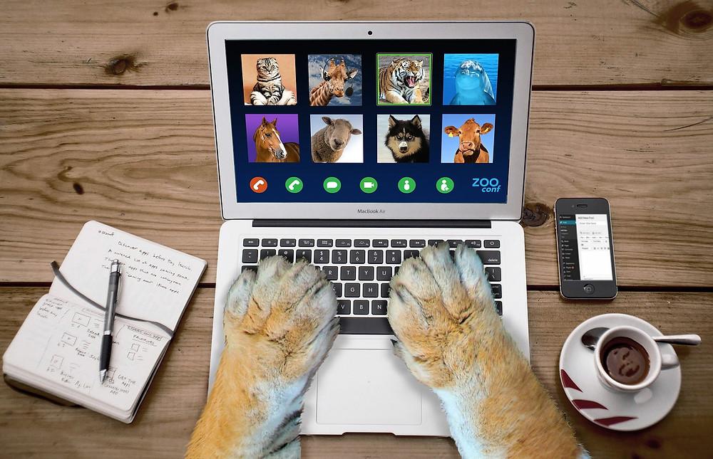 Chat en conférence zoom avec ses amis