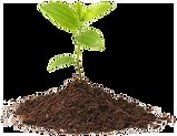 img-tree-seedling.png