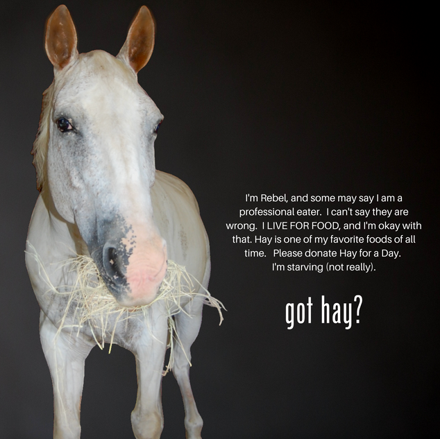Hay for a Day-Rebel.png
