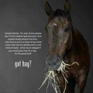 Hay for a Day-Jute.png