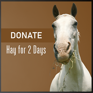 Donate Hay for 2 Days.png