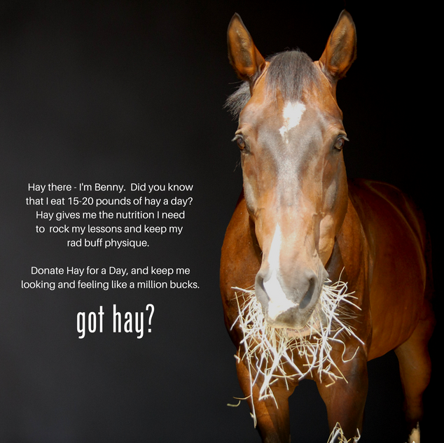 Hay for a Day-Benny.png