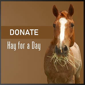 Donate Hay for a Day.png