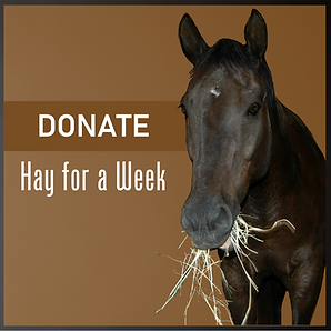 Donate Hay for a Week.png