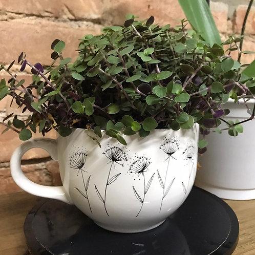 Cachepot/bowl com planta - Arterisse