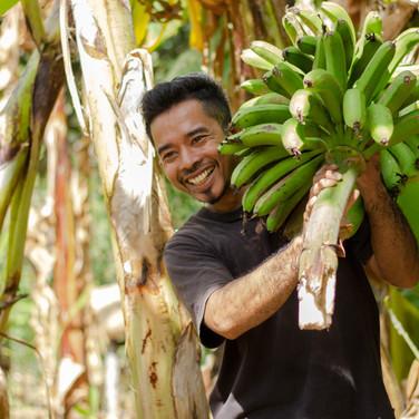 Banana Farmer