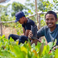 Farmers  Training & Plants Rejuvenations