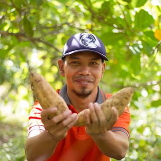 Sweet Potato Farmer