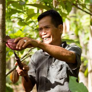 Cacao Farmer