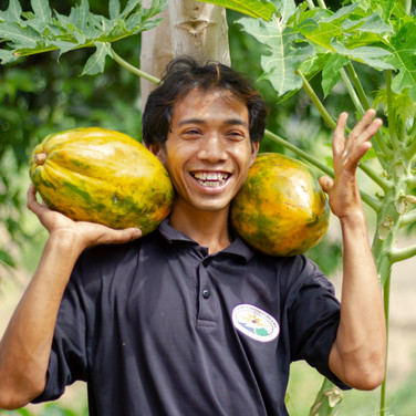 Papaya Farmer