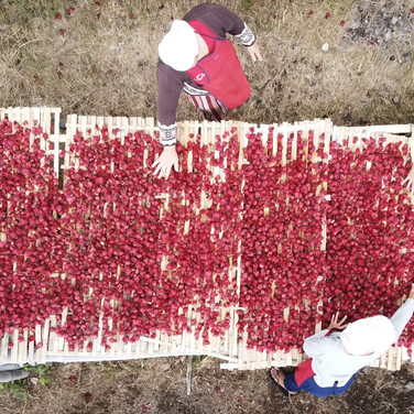 Rosella Drying Process