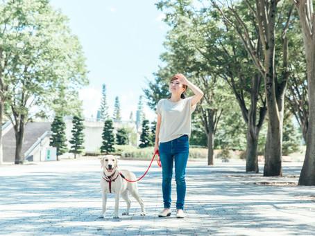 Can pets get sunburned?