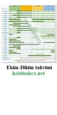 ekim-dikim-mini (1)