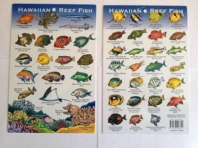 Hawaii Reef Fish Card