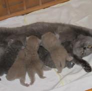 Mama_Urmel,Ulrika,Uro,Ulli,Umberto.jpg