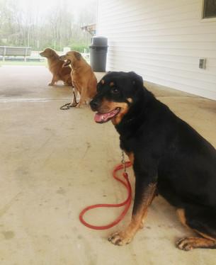Kevin three dogs sit say 008.JPG
