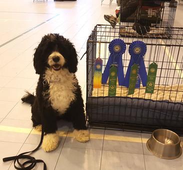 kevin mac dog training champion.jpg