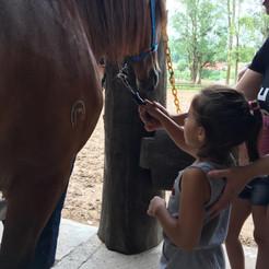 Escovando a crina do cavalo (1).jpg