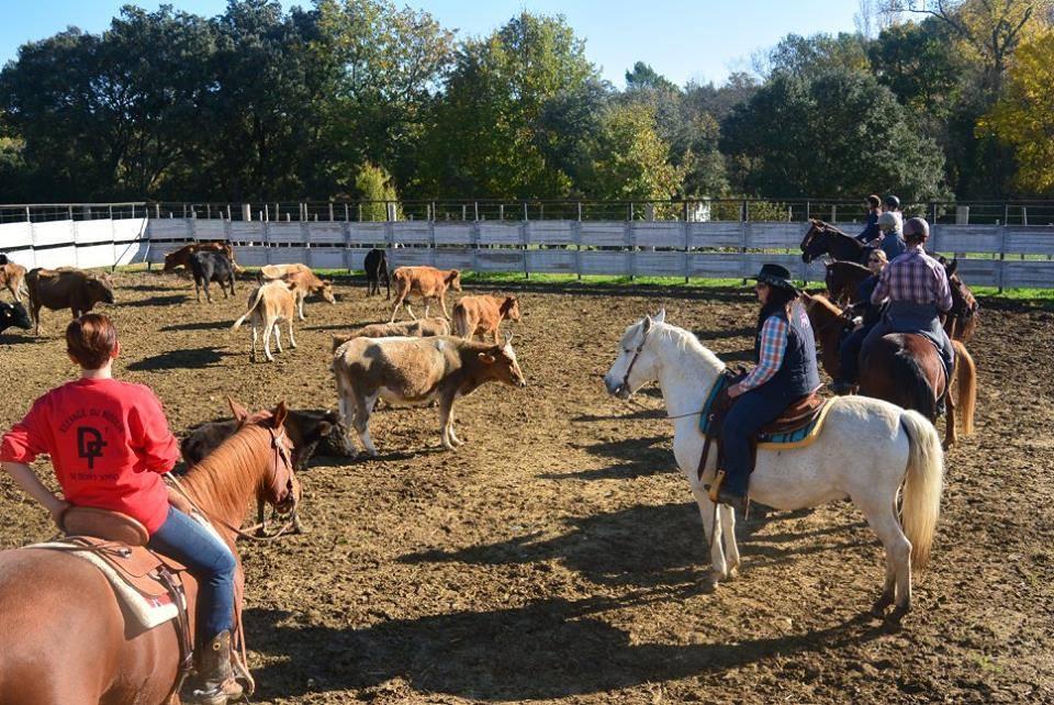 Journée tri de bétail