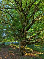 Ancient Woodland 'The Roughetts'