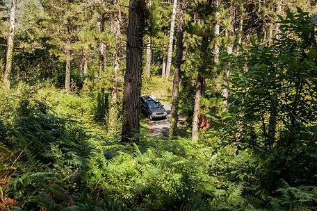 Jeep bosco dall'alto.jpg