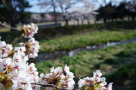 猪苗代の春風景
