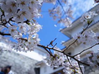 二本松市・霞ヶ城公園の春の彩り