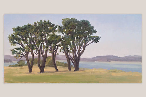 Trees near Elberry Cove
