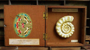 Miss Clara Knight's Curious Collections. Seashore Specimens (I)