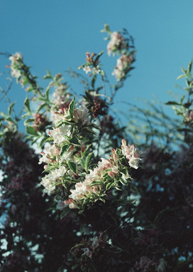 Mid Spring Flowers - 2020