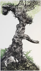 Wistman Oak