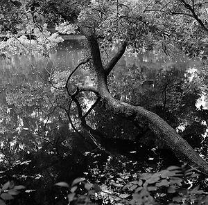 Backyard Branch