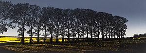 Hedgerow, Shropshire