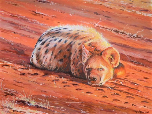 Afternoon Nap - Spotted Hyena