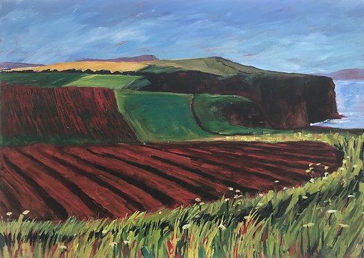 Fields Near Budleigh
