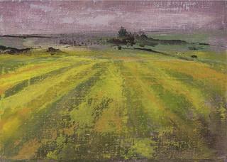 Italian Golden Fields