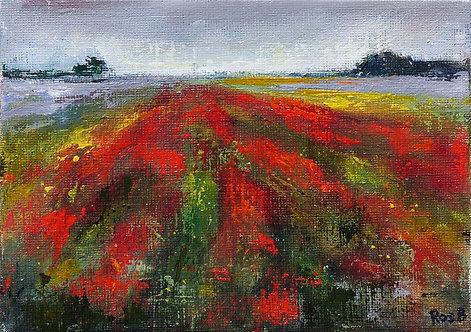 Italian Poppy Fields