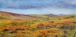Dartmoor in Bloom