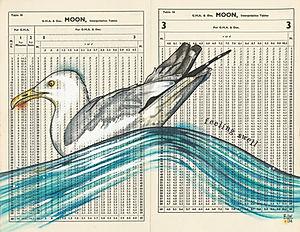 Moon Gull