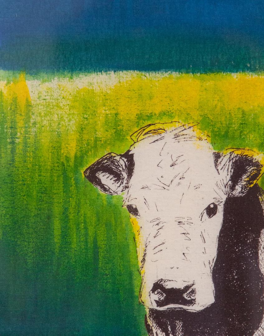Tokoroa Cow