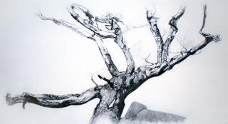 Wistman's Oak